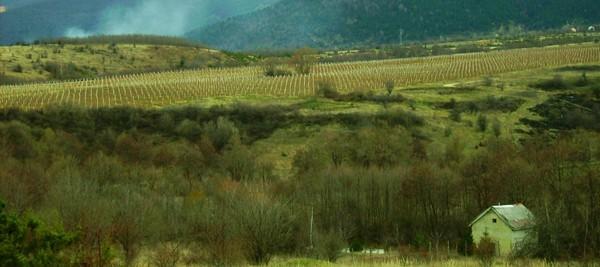 cropped-patrice-koerper-wishful-thinking-works-life-coaching-and-speaking-baba-mountains.jpg