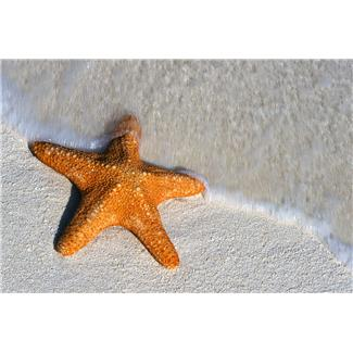 Patrice Koerper  Life Coach Wishful Thinking Starfish June 2013